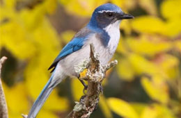 Bond Update: Blue Jay Selected as Mascot for Atfalati Ridge